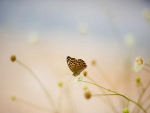 Mariposa en el extremo de una flor