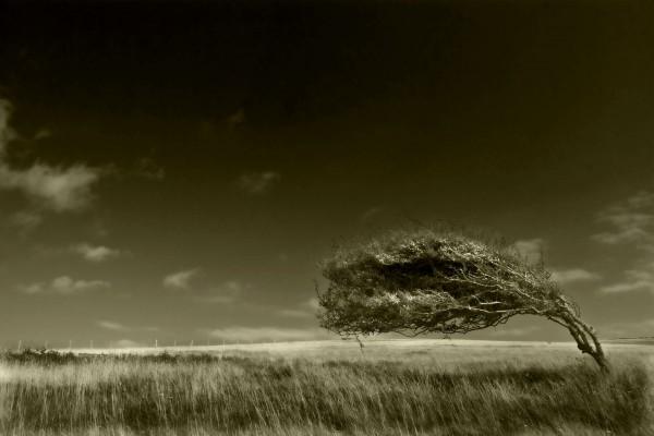 Árbol paralelo al suelo