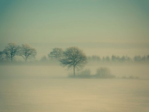 Árboles entre la niebla