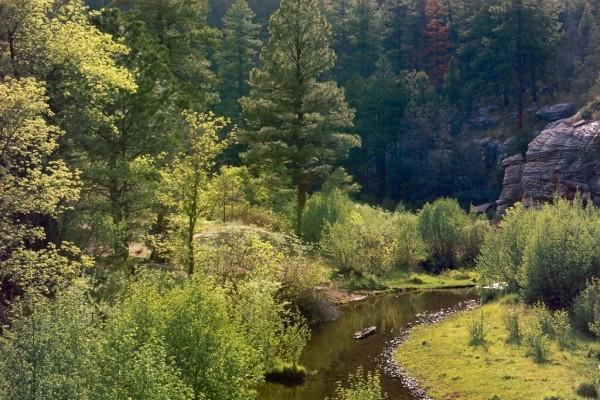Riachuelo atravesando un bosque en Arizona (EEUU)