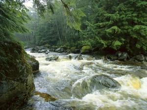 Río salmonero en la isla Princesa Real (Columbia Británica, Canadá)