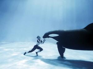 Postal: Orca frente a su cuidadora