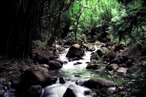 Corriente de un río en Hawái, Estados Unidos