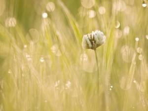 Una flor blanca impregnada de rocío