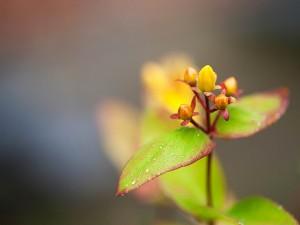 Una delicada flor con el rocío de la mañana