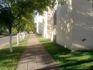 Postal: Una calle arbolada