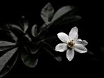 Una flor blanca en la oscuridad