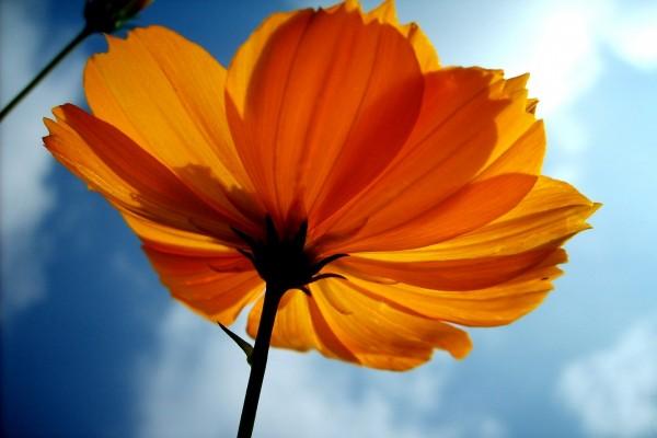 Una flor mirando al cielo