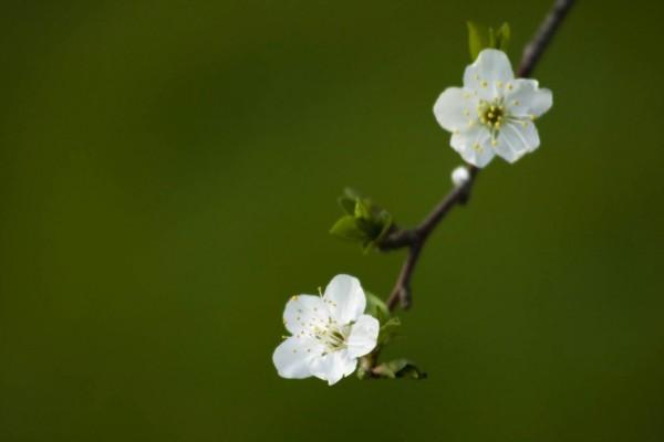 Delicadas florecillas blancas