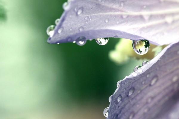 Gotas de agua en los pétalos de una flor