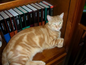Gato durmiendo en la librería