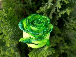 Rosa verde con purpurina