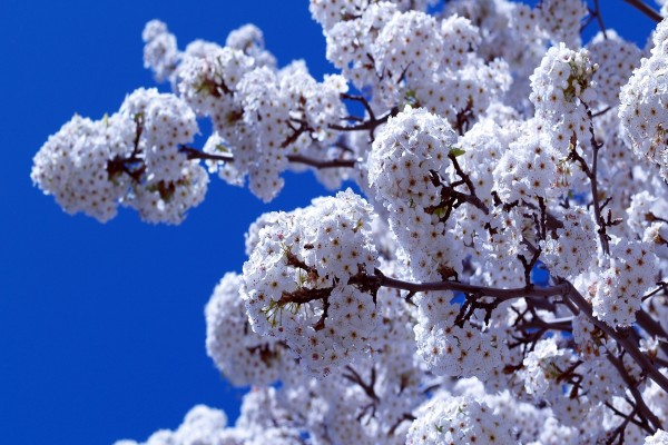 Árbol cubierto de flores
