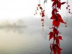 Ramas colgantes con hojas rojas