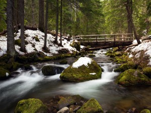 La corriente del río, cerca de Tamanawas Falls, Oregon
