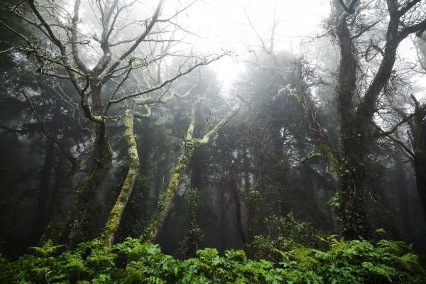 Árboles buscando la luz, en un bosque entre Sintra y Cascais, Portugal