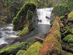 Cascadas en East Fork Coquille River, Oregon (EE.UU.)