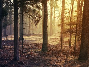 Postal: Brendan T. Byrne State Forest, Nueva Jersey