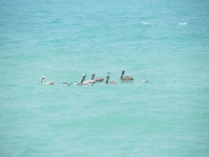 Convivencia de aves en el mar