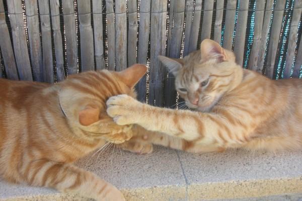 Gatitos jugando