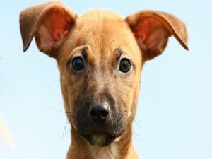 Postal: La mirada de un cachorro