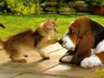 El principio de una bonita amistad
