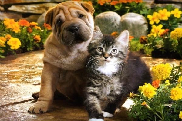 Perro y gato posando para la foto