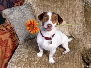 Perro regalando una flor