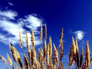 Hierbas bajo un cielo azul