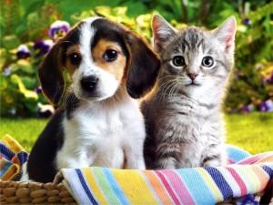 Postal: Perrito y gatito en una cesta