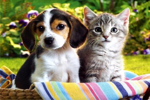 Perrito y gatito en una cesta