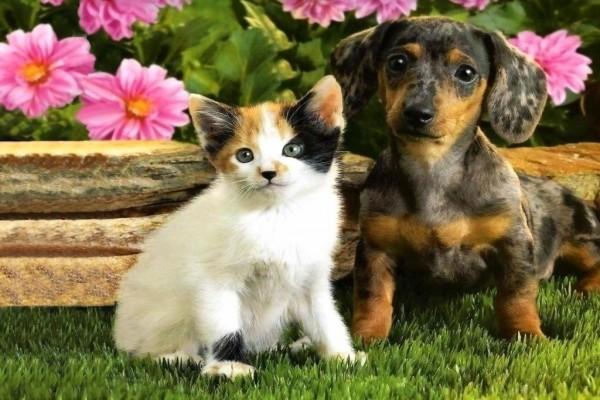 Gatito y perrito de piel manchada