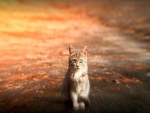 Un precioso gatito