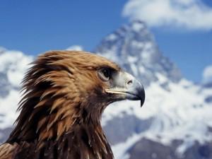 Águila en la montaña