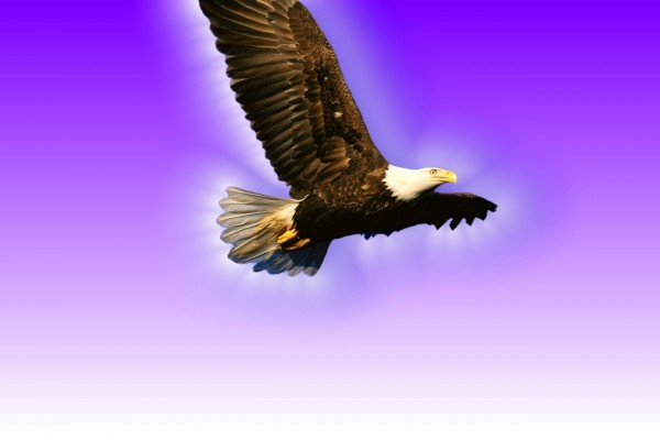 Águila volando bajo un fondo púrpura