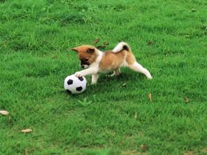 Perrito jugando al fútbol