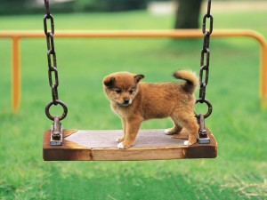 Postal: Cachorro en un columpio