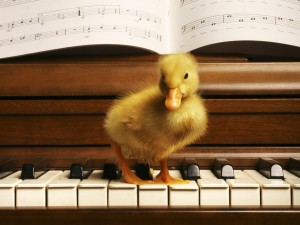 Postal: Patito en el teclado de un piano
