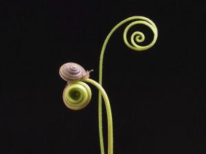 Caracol en una curiosa planta espiral