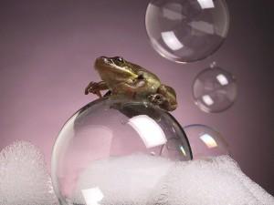 Postal: Una rana sobre una burbuja de jabón