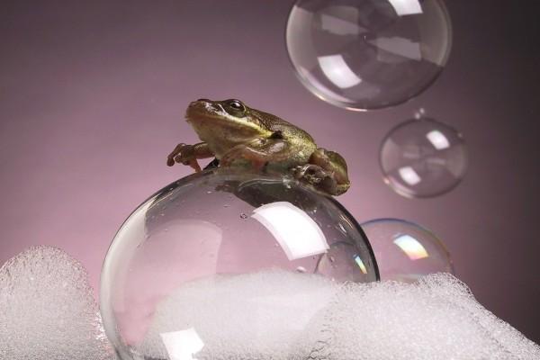 Una rana sobre una burbuja de jabón