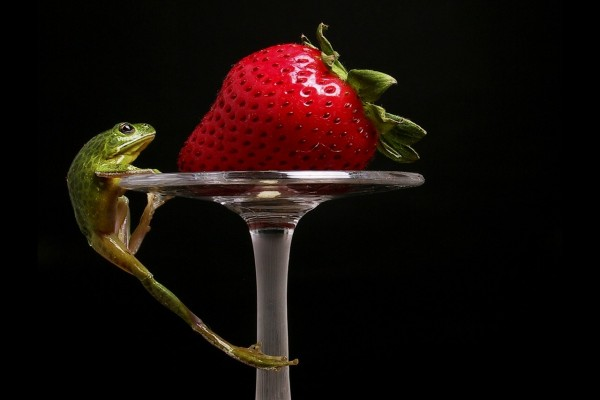 Rana intentando llegar a una fresa