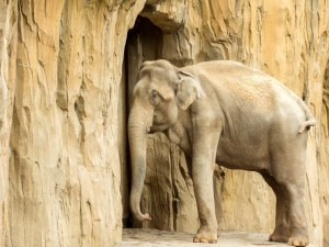 Postal: Elefante asiático
