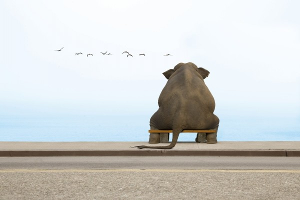 Elefante sentado mirando al mar