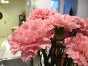 Claveles de color rosa