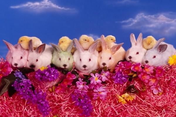 Conejos, pollitos y flores