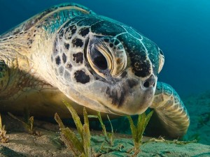 Un primer plano de una tortuga marina