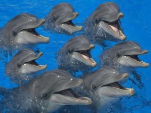 Grupo de delfines en el agua
