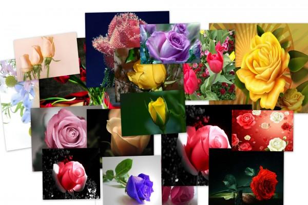 Collage de rosas