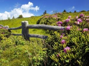 Postal: Cercado de madera en el campo
